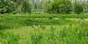 Natuurgebied de Zeven Gaten (kees torn) Tags: dezevengaten zuidhollandslandchap florafauna gemeentewestland delier kiviet ganzen eenden