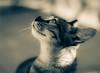Karelia (Vic Morrison) Tags: karelia cat gatos gata animales animal mascotas pets sony sonyvg20 vg20