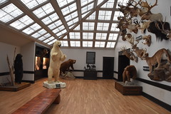 Wonders of Wildlfie National Museum and Aquarium (Adventurer Dustin Holmes) Tags: 2018 wondersofwildlife museum room taxidermy bears polarbear springfieldmo springfieldmissouri bassproshops basspro outdoorworld greenecounty animals grizzly