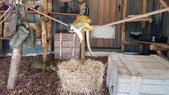 20180523_111209 (TheSlayerNL) Tags: wildlands emmen zoo dieren animals adventure wildlandsadventurezoo
