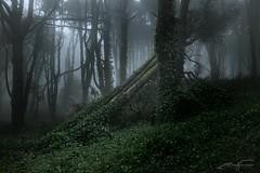 Spirit (jorgeverdasca) Tags: spring greenwood green foggy fog mist magiclight darklight floresta trees landscape forest gothic goth dark darkwoods woods woodland canonphotos canon sintra portugal 2470 5dmrk4 5d