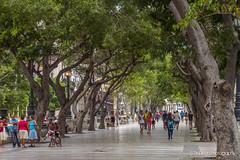 Calles de la Habana   TrinDiego (TrinDiego) Tags: calles habana havana cuba trindiego candid street photography greaterantilles caribbean franco