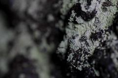 Islands (Iulian Dumitru) Tags: nature lichen lavacave rock isolation iceland