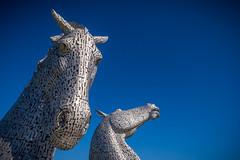 Oh, hi. (G. Warrink) Tags: visitscotland scotland alba scotspirit scotlandsbeauty thisisscotland hiddenscotland lovescotland findingscotland beautiful horses sculpture lock falkirk kelpies canal horse strength pride