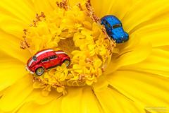 Shiny Beetles (Ken Hendricks and Larry Patchett) Tags: beetles vw volkswagen laurenlang hoscale hotwheels malibu