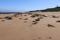 St Combs Beach_may 18_644 (Alan Longmuir.) Tags: stcombsbeach grampian aberdeenshire stcombs