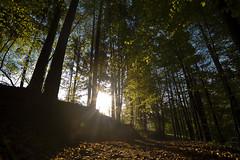 Spotlight in the Woods (s.ehrenhoefer) Tags: landscape feistritztal hochegg wood sun spotlight