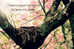 Nature (tammy_grooms) Tags: nature quote tree birdnest nest spring dogwoodtree blooms flower pink isaacnewton sweetwater tennessee lostsea tammygrooms canonreblexs photoshop