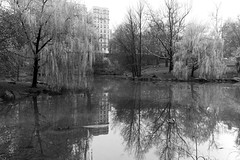 Willow to Willow _ bw (Joe Josephs: 3,166,284 views - thank you) Tags: centralpark landscape landscapephotography nyc newyorkcity travel travelphotography urbanexloration outdoorphotography outdoors parks peaceful quiet tranquil urbanparks springtrees willowtrees lake pond water waterreflections monochrome bw blackandwhite blackandwhitephotography
