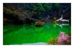 the season of fresh green #2 (kouji fujiwara) Tags: fujifilm fujifilmxt2 xt2 xf1655mmf28 xf1655mm f28 green spring freshgreen fresh reflection wildcherry landscape landschaft