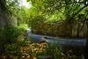rumori sottobosco (swaily ◘ Claudio Parente) Tags: abruzzo acqua lavino bosco alberi d500 swaily