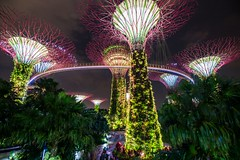 Glowing trees (Johannes R.) Tags: singapore gardens by bay asia night dark light colorful colourful illuminated illumination glow glowing wideangle wide skywalk tree artificial longexposure tripod canon 70d efsstm1018mm