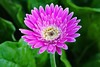 Flowers are beautiful! (Uhlenhorst) Tags: 2017 australia australien plants pflanzen flowers blumen blossoms blüten reisen travel unidentifiedplant