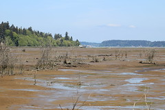 IMG_7695 Nisqually Refuge - estuary at low tide (Jon. D. Anderson) Tags: nisquallynationalwildliferefuge estuary estuaryrestoration mudflat luhrbeach