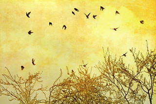 a museum of waxwings