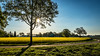 Mustardfield Landscape (Fred Veenkamp) Tags: flare zon sun azelo overijssel mosterdplant mustard landschap landscape