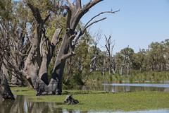 Loch Luna Game Reserve - Riverland - Australia (wietsej) Tags: loch luna game reserve riverland australia sony rx10 iv rx10m4 landscape nature rx10iv