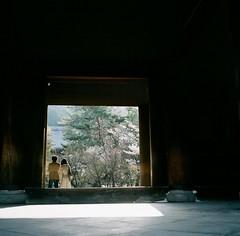 cherish seasonal beauty (Saori_) Tags: film rolleiflex kyoto japan twinlens sakura cherryblossom middiumformat 120 120film 京都 さくら ローライフレックス