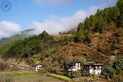 Bhutan landscapes (Viaggiatori del Mondo) Tags: bhutan buddhism buddismo buddhismo spirituality templi tempio dzong spiritualita tibet himalaya armonia pace esperienza montagna flags bandiere yak iak villages villaggi nomads mountain stupa stupe