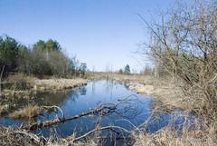 Волинське болото InterNetri Ukraine 06