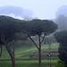 Rome - Rione X Campitelli - Palatino (Palatine Hill)