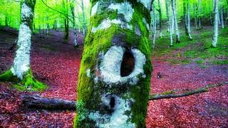 Bosque saturado 4