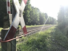 duisburgerwald (sefakrky) Tags: duisburg wald forest green sun trees baumen zug train rails water wasser small lake germany day life tag nature nrw iphone7plus