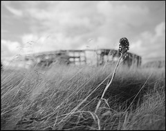 the wreck behind (nahlinse) Tags: boat donegal film fujineopanacros ireland ship travel wreck