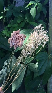 Dried flowers in the breeze