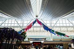進め!! (Blue Nozomi) Tags: haneda airport koi no bori koinobori childrens day kodomo hi carp