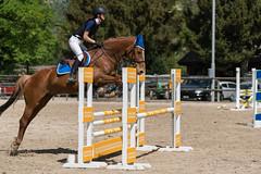 A9905781_s (AndiP66) Tags: vereinsspringen springen sursee 2018 29april2018 april pferd horse schweiz switzerland kantonluzern cantonlucerne concours wettbewerb horsejumping equestrian sports springreiten pferdespringen pferdesport sport sony alpha sonyalpha 99markii 99ii 99m2 a99ii ilca99m2 slta99ii sony70400mm f456 sony70400mmf456gssmii sal70400g2 amount andreaspeters