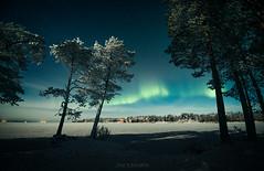 November lights (janiylinampa) Tags: northernlights auroraborealis aurora revontulet lapland finland lappi suomi laponie laponia lappland finnland rovaniemi ice lake trees blue white green snow winter
