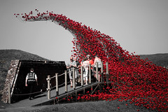 Poppy Wave (Dom Walton) Tags: poppy wave fort nelson royal armouries museum domwalton selective colour red poppies