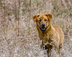 On the Run! (dbking2162) Tags: dogs animal nature nationalgeographic eyes indiana outside outdoor