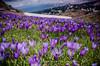 Spring in Rila (Toni Terziev) Tags: 500px spring rila mountains mountain landscape landscapes home bulgaria beautiful