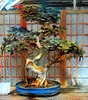 Bonsai (Marked_man) Tags: tree bonsai mixedmedia art artwork artsy hyperreality beyonghd colors colorful intense beautiful life nature plant plantlife japanese