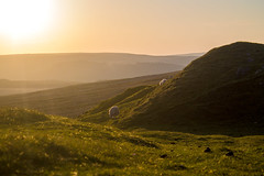 mountain sheep (Jacob Y) Tags: brecon wales mountain landscape sheep nature wildlife rolling hills lamb animal sunrise