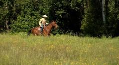 The lonely cowboy! (Renata1109) Tags: reiter cowboy bavaria bayern pferd horse ausritt deutschland germany outdoor sommer freiheit gras feld wiese baum wald tree wood country countrylife