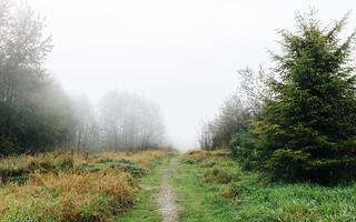 To Walk Into Fog