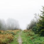 To Walk Into Fog thumbnail