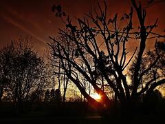 Sunset (fleckchen) Tags: sonnenuntergang sonnenuntergänge sunset sunsets vogtland bäume abendstimmung abendstimmungen abends abend abenddämmerung abendsonne eveningmood evening heimat