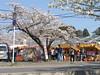Shops (しまむー) Tags: sony cybershot dscf828 carl zeiss variosonnar t 7151mm 28200mm f228 sakura festa ashino park goshogawara aomori