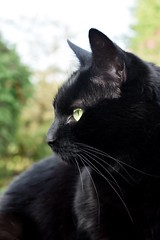 Anderson the cat (W.Love) Tags: greeneyes lucky black blackcat