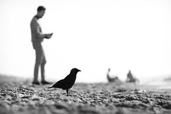 The birdwatcher B (Drummerdelight) Tags: blackwhite bokeh shillouette beach seaside peoplewatching candidphotography