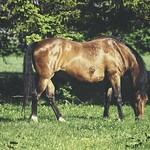 20180514-163737 - Spring Horse Bokeh thumbnail