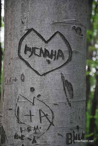 Ботанічний сад імені Гришка Буковий гай InterNetri  Ukraine 085