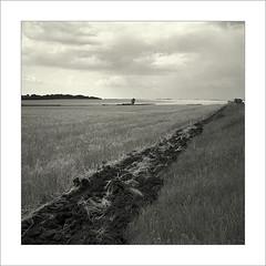 Black line. (Yuriy Sanin) Tags: поле пашня дерево борозда чб 6х6 юрийсанин fiel line black blackandwhite bw tree arable land sky 6x6 landscape rolleiflex6008
