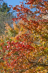 Fall colours near Smuggler's Notch, Vermont (Miche & Jon Rousell) Tags: usa fall autumn vermont stowe mountmansfield smugglersnotch statepark leaves red yellow orange trees hiking trail skiing skiresort