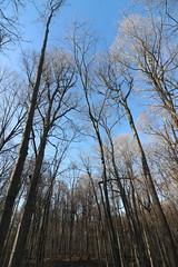 Visit to Maybury State Park (Northville, Michigan) - April 2018 (cseeman) Tags: parks stateparks michiganstateparks departmentofnaturalresources michigandepartmentofnaturalresources northville michigan maybury mayburystatepark trees trails paths nature publicparks wildlife mayburyapril2018