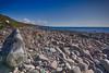 melvaigbeachIMG_6083 (mandyerush) Tags: pebbles seaweed sea minch isle skye otterburn driftwood lesser celadine crustacean beach fairy